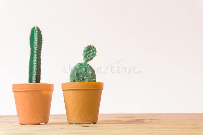Cactus. Minimal creative stillife on wooden table and white background. Empty space nature stock photography