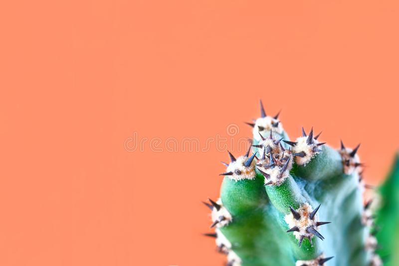 Cactus minimal fashion stillife concept. Trendy Bright Colors Mood. Green cactus with thorns on orange background. stock photography