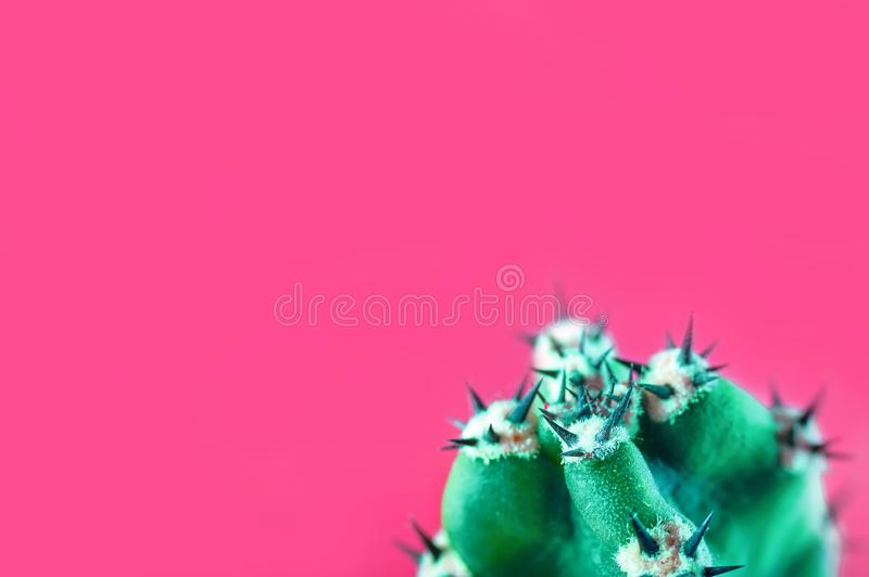 Cactus minimal fashion stillife concept. Trendy Bright Colors Mood. Green cactus with thorns on pink background. stock photography