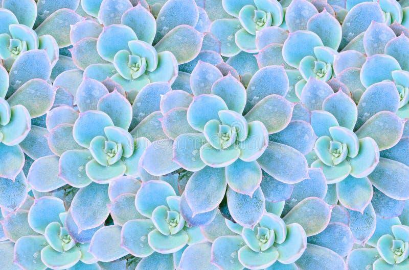 Cactus mis en pot photographie stock