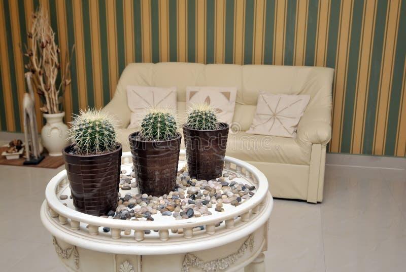 Cactus mis en pot sur une table photographie stock libre de droits