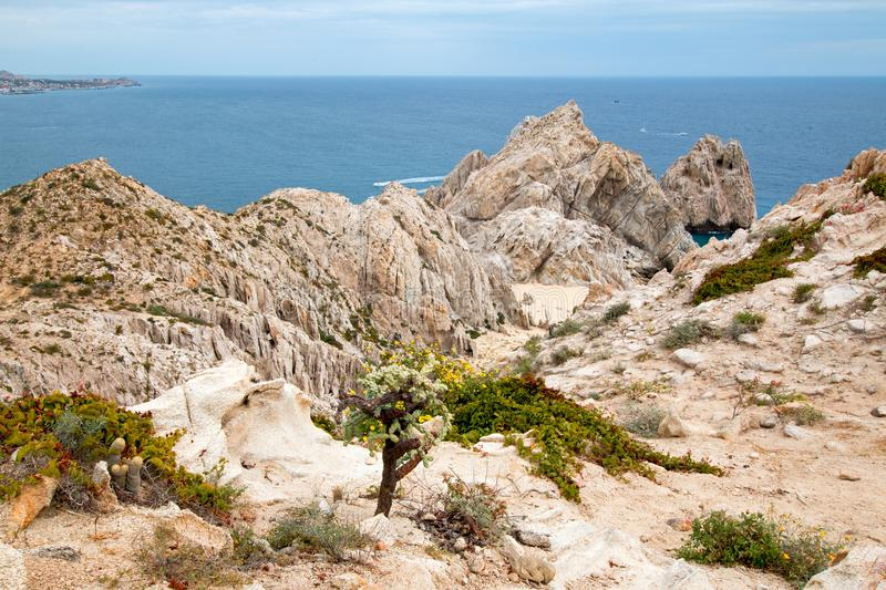 Cactus on Mount Solmare overlooking Divorce Beach at Lands End in Cabo San Lucas in Baja California Mexico. BCS royalty free stock image