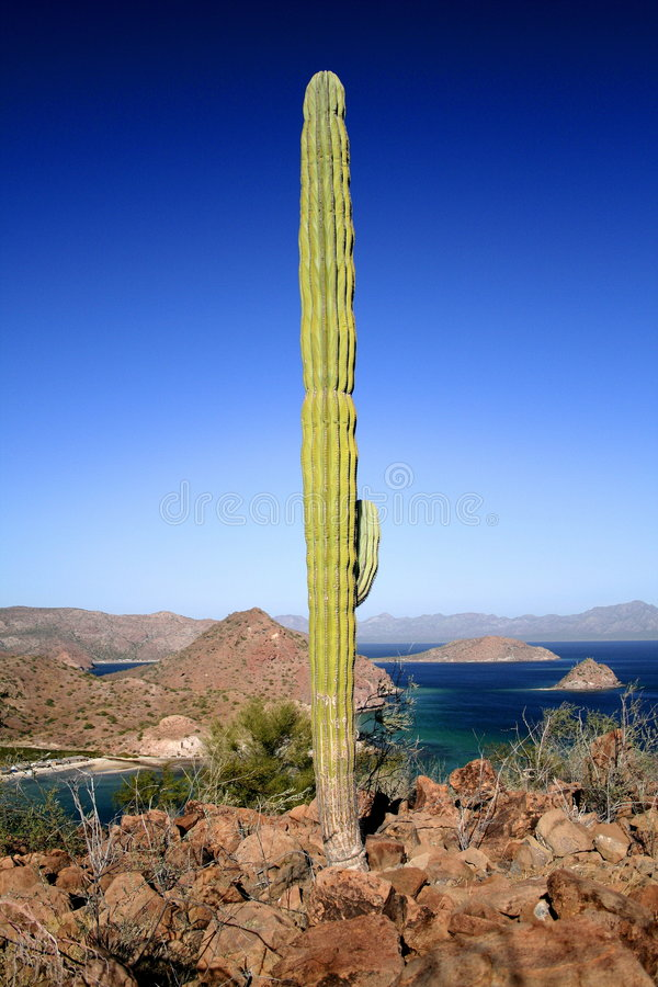 Cactus and muntains royalty free stock photos