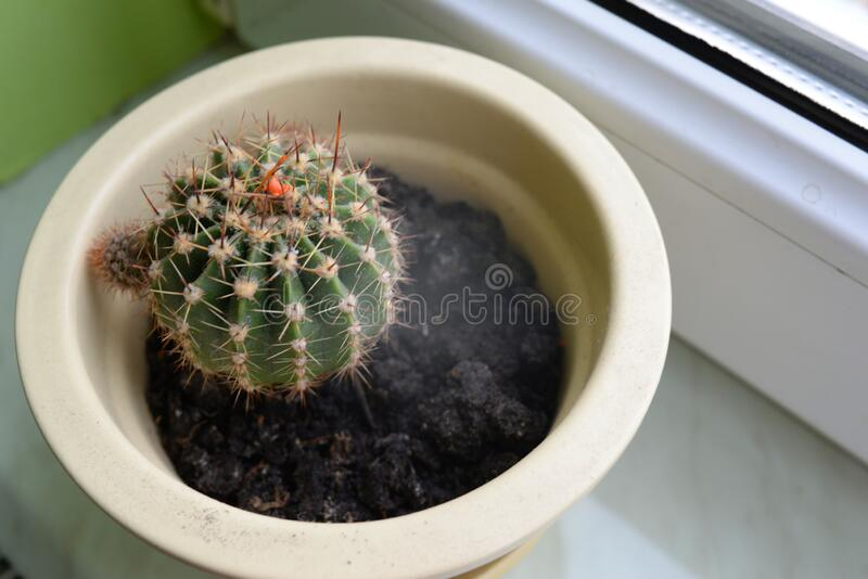 Cactus with needles in a flowerpot on a window sill for printing. On paper stock photo