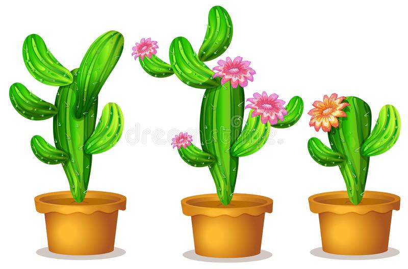 Cactus nel vaso della pianta illustrazione di stock