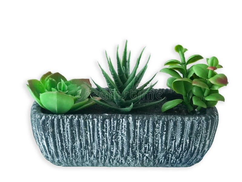 cactus 3 nell'isolato in bianco e nero del vaso su fondo bianco fotografia stock