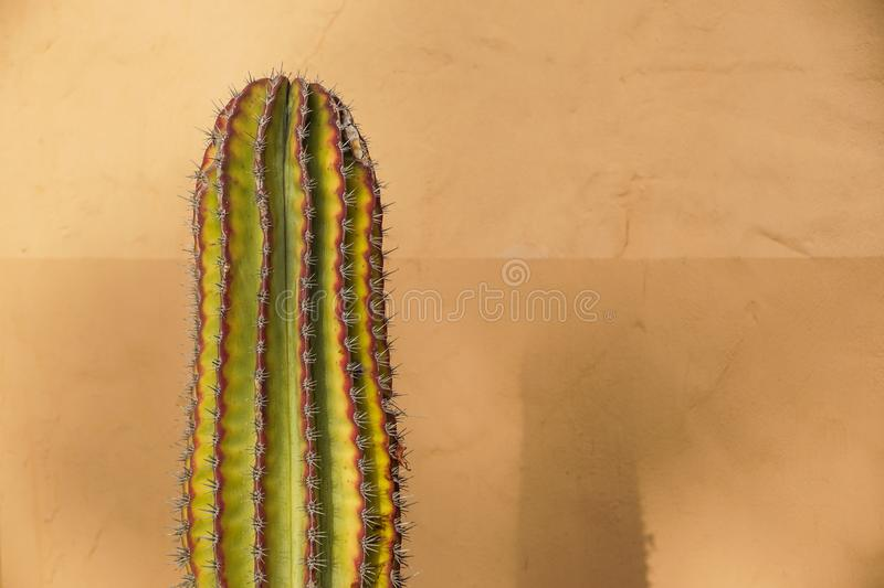 Cactus Neon. Minimal Stillife. Art Gallery Fashion Design. Vanilla Trendy Color. Concept on Yellow background. Detail.  stock photos