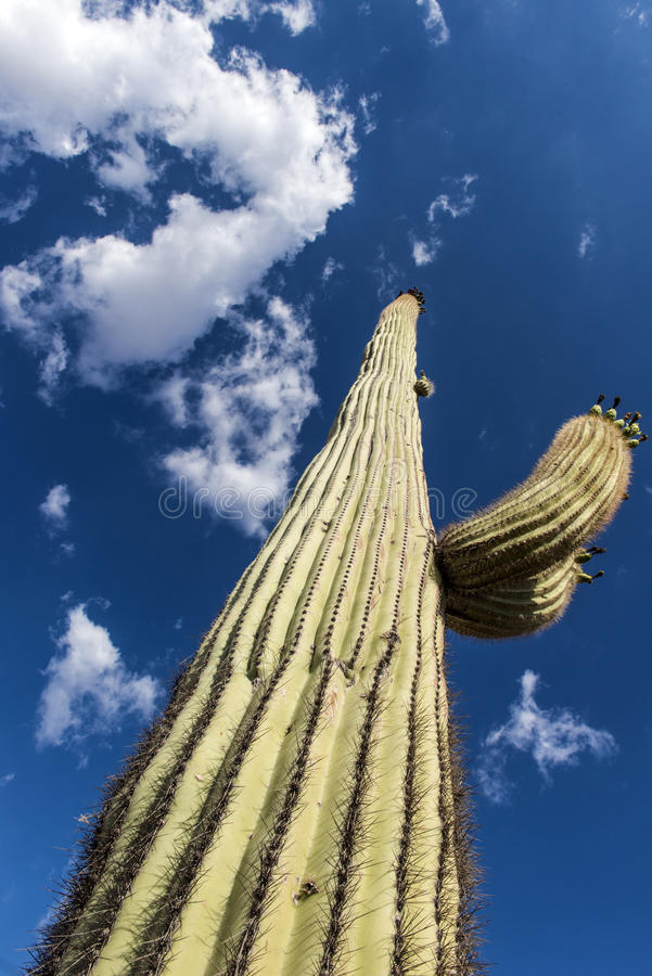 Cactus in Oaxaca, Mexico stock foto