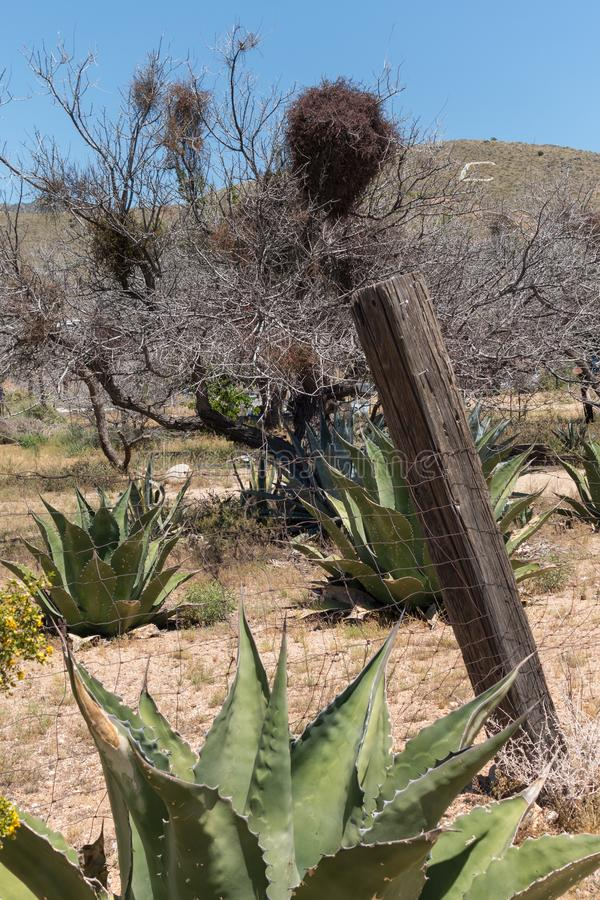 Cactus and old fence, Chloride, Arizona. Rustic western scene, fence and cactus in Chloride, Arizona stock photography