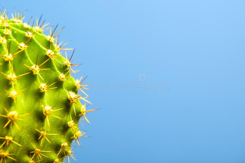 Cactus op blauwe close-up als achtergrond royalty-vrije stock foto's