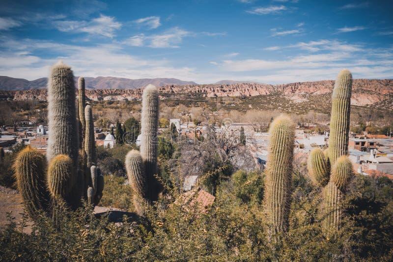 Cactus op de kleurrijke vallei van Quebrada DE Humahuaca in Jujuy stock fotografie