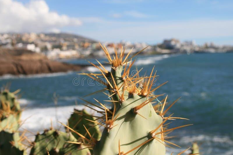 Cactus op een heuvel die Costa Adeje Tenerife overzien royalty-vrije stock afbeelding