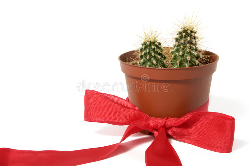 Cactus in orange decorative pot with red bow stock photography
