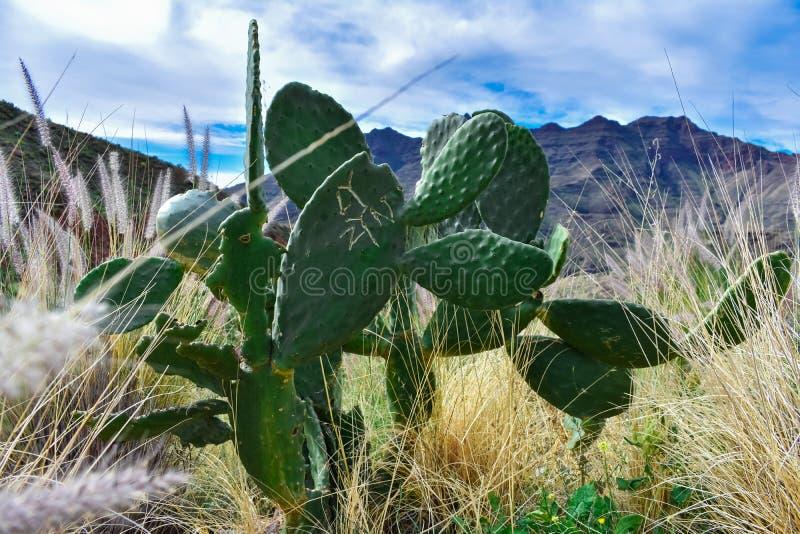 Cactus original imagen de archivo libre de regalías