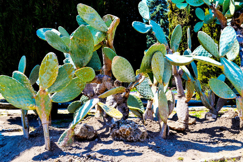 The cactus and others plants of the Botanical Garden, Bulgaria, stock image
