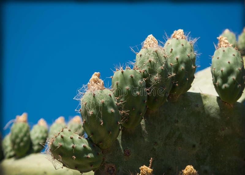 Cactus in the outdoor garden stock image