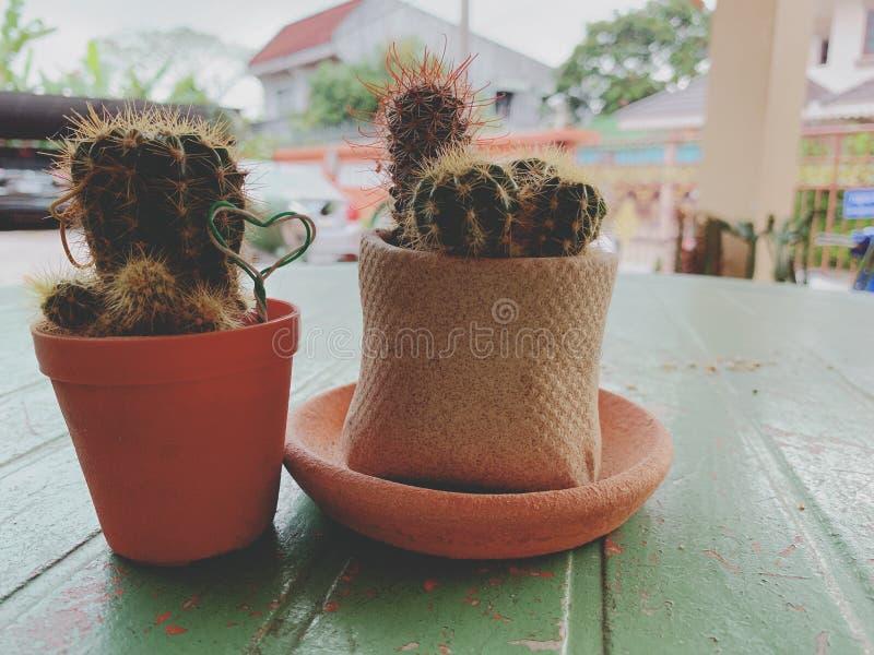 Cactus piantato in piccoli vasi immagini stock libere da diritti