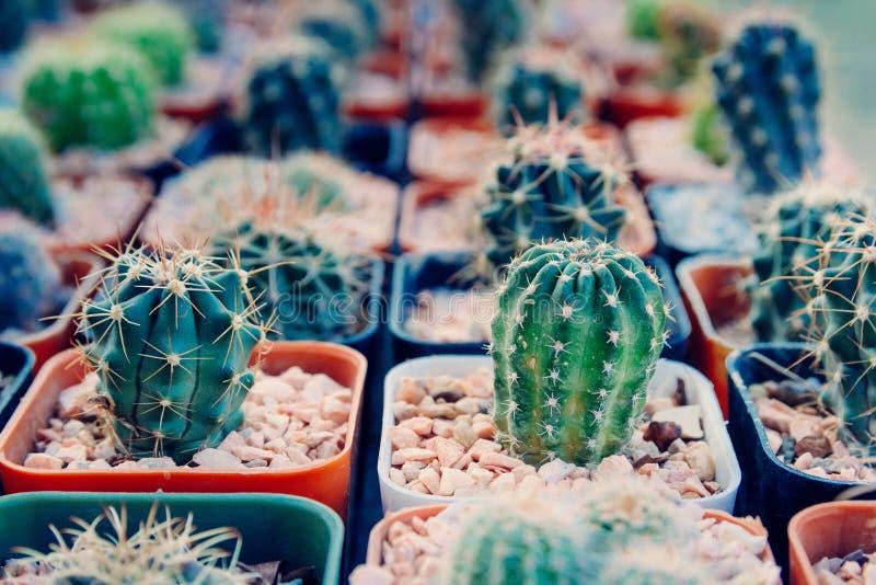 Cactus piantato in vasi - effetto di colore fotografie stock libere da diritti