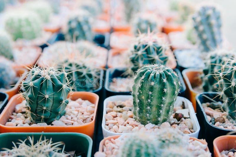 Cactus piantato in vasi - effetto di colore immagini stock libere da diritti