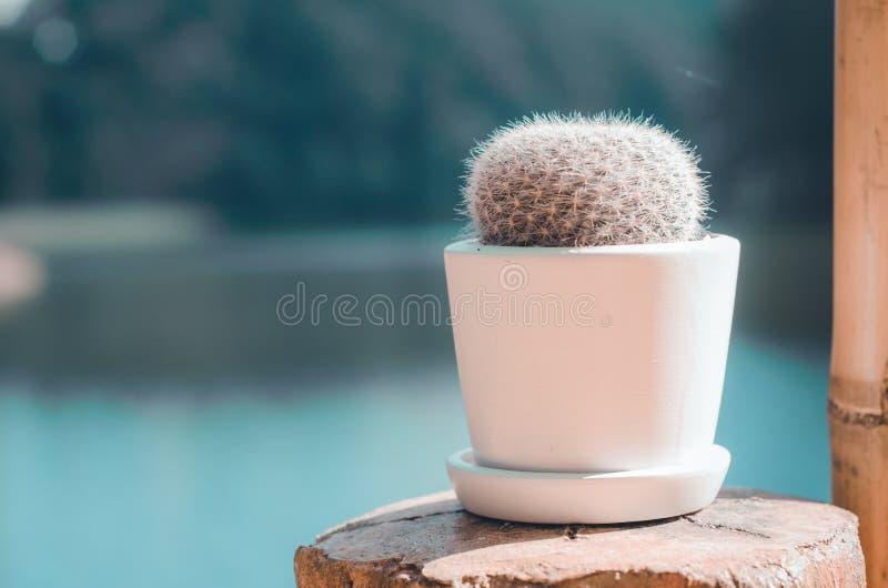 Cactus piantato in vasi fotografie stock