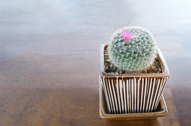Cactus with pink flower in clay pot on wooden table background stock images