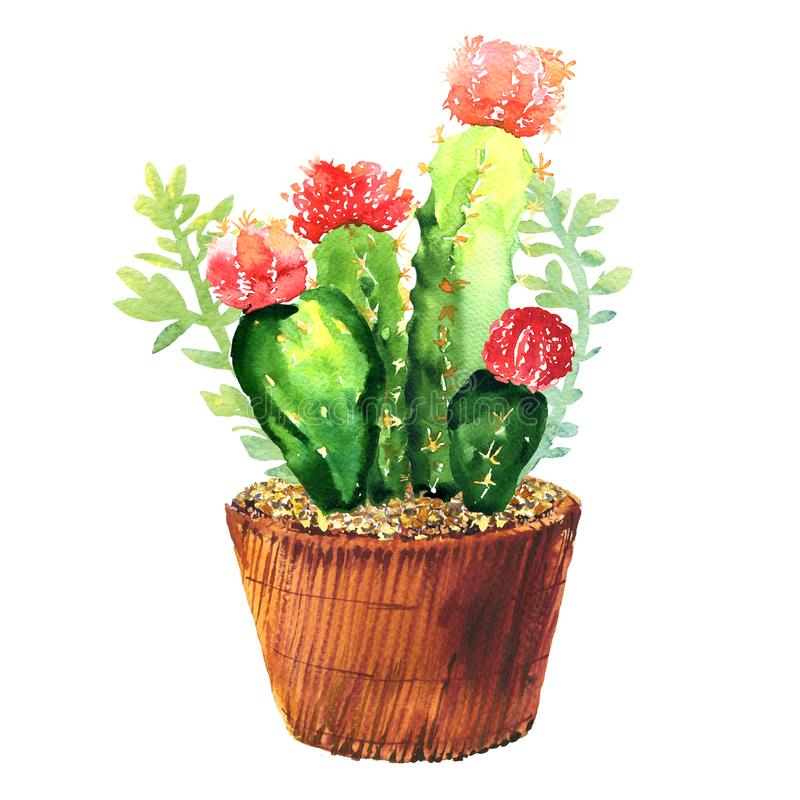 Cactus with pink flower, succulent in pod, tropical blossom cactus species, flowering green house plant, flowers design stock illustration