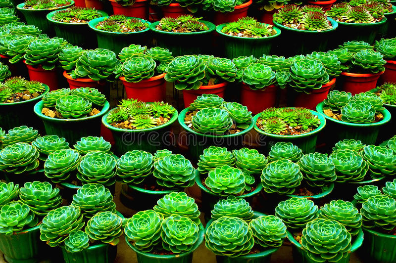 Cactus Plant stock photography