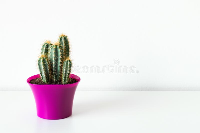 Cactus plant in bright pink flower pot against white wall. House plant on white shelf with copy space. Cactus plant in bright pink flower pot against white wall royalty free stock photos