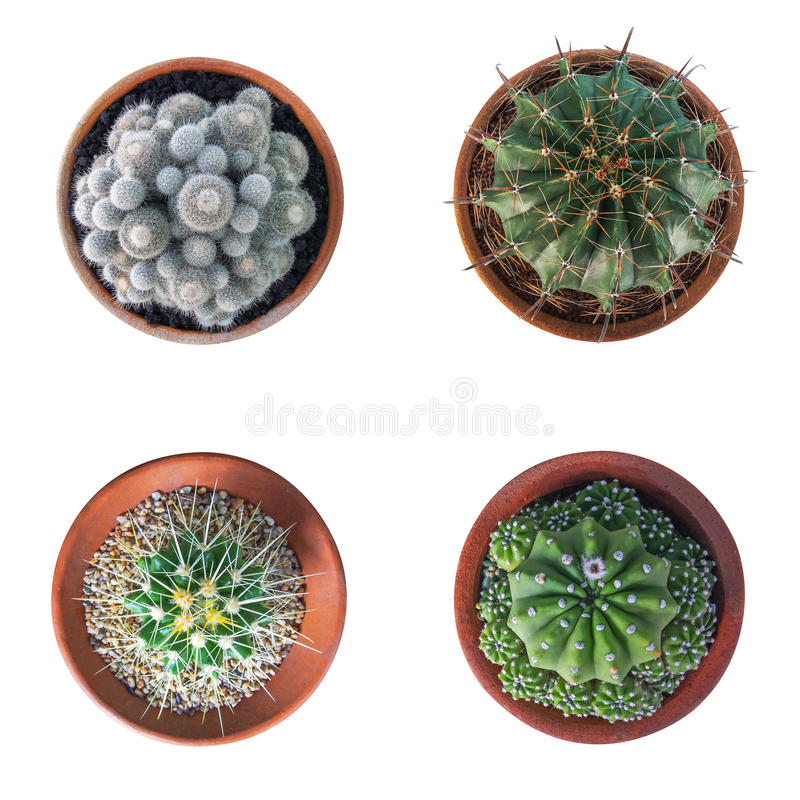 Cactus plant in clay pot top view collection isolated on white b royalty free stock images