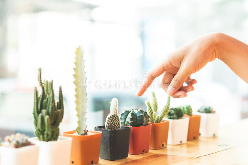 The cactus plant is decorated at the edge. royalty free stock photo