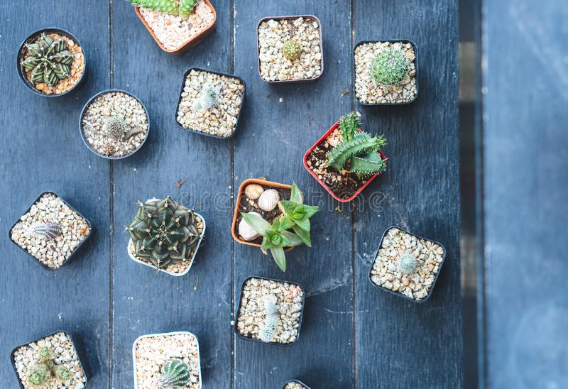 The cactus plant is decorated at the edge on a table. stock photos