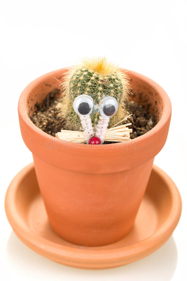 Download Cactus Plant In Flower Pot Isolated On White Royalty Free Stock Photography - Image: 37694947