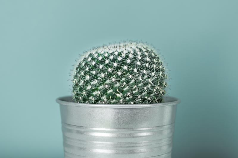 Cactus plant in metal pot. Potted cactus house plant against pastel turquoise colored wall. Cactus close up royalty free stock image