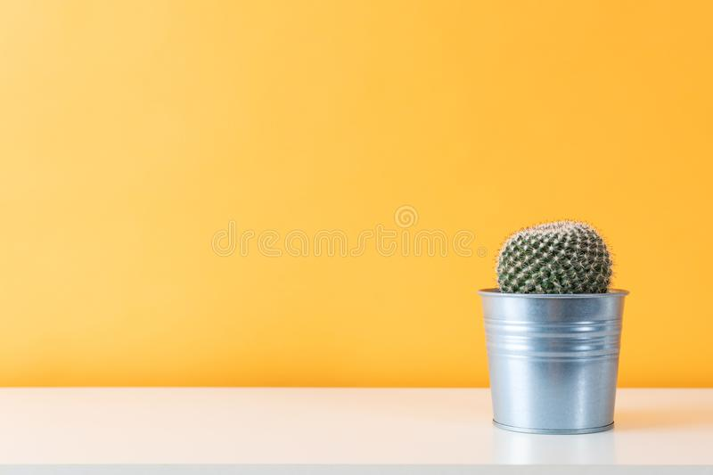 Cactus plant in metal pot. Potted cactus house plant on white shelf against pastel colored wall. Cactus plant in metal pot. Potted cactus house plant on white royalty free stock image
