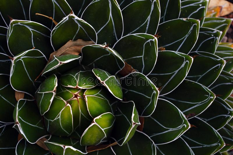 Cactus plant in Mexico desert stock photos