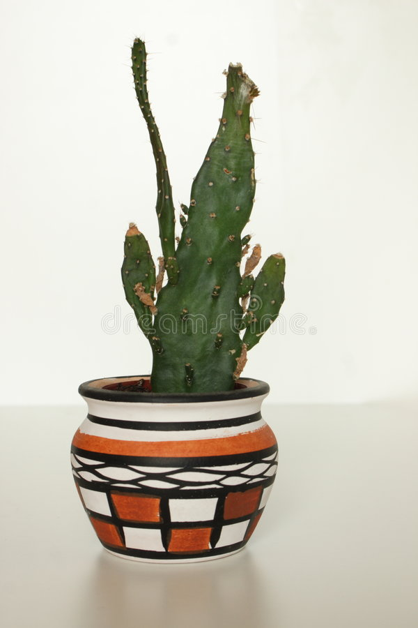 Cactus in plant pot stock image