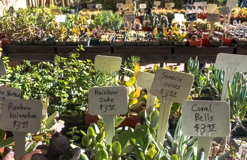 Cactus at Plant Sale stock photos
