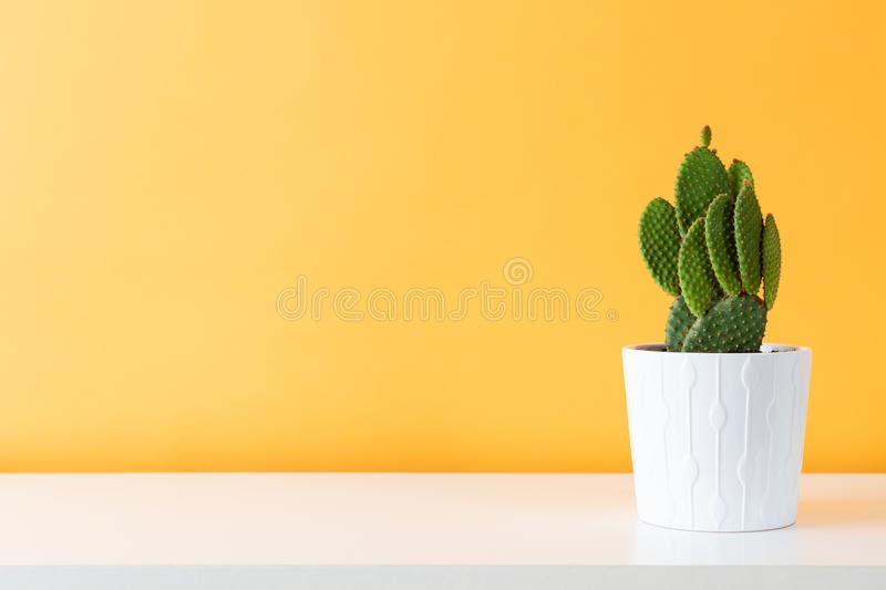 Cactus plant in white pot. Potted cactus house plant on white shelf against pastel colored wall. Cactus plant in white pot. Potted cactus house plant on white royalty free stock photography