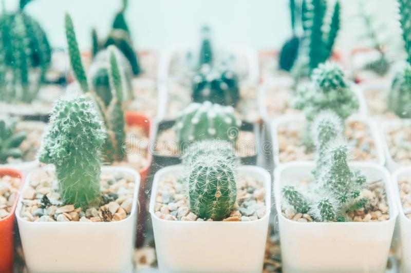 Cactus, plant, white, succulent, glass, home, pot, vase, background, , potted, succulents, decoration, small, table, terra royalty free stock images