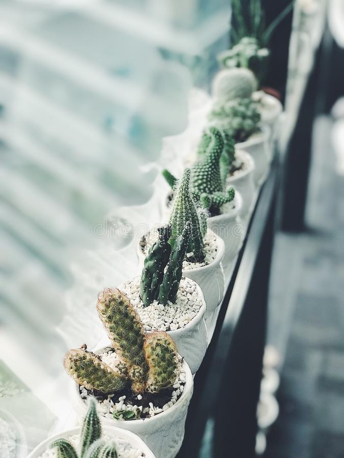 Cactus Plants stock photography