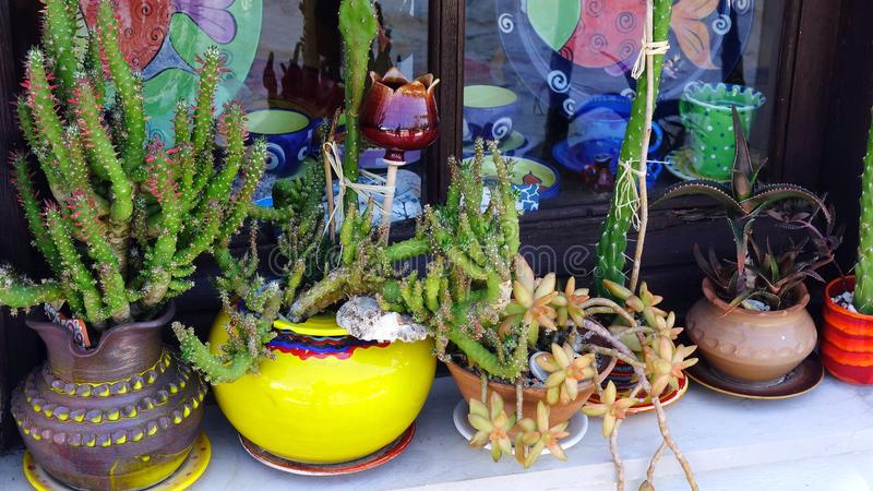 Cactus Plants in Colourful Pots, Greek Island stock image