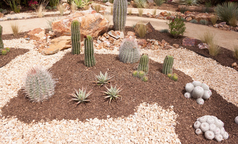 Cactus Plants in Garden. Different types of cactus plants in a very nice desert type garden royalty free stock image