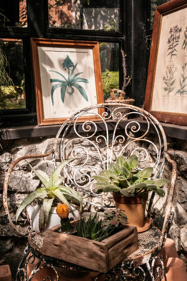 Cactus, plants pot and decoration ornaments on iron chair in small vintage style greenhouse stock photo