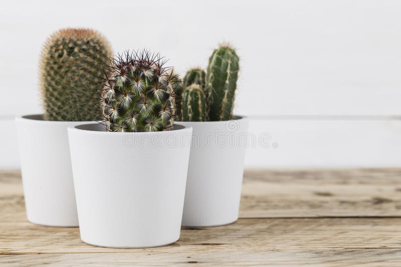 Cactus plants in pots royalty free stock photography