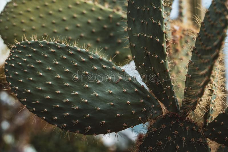 Cactus and plants from ten different climate zone stock image