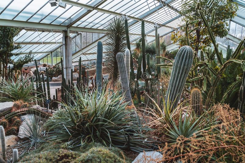 Cactus and plants from ten different climate zone royalty free stock photography