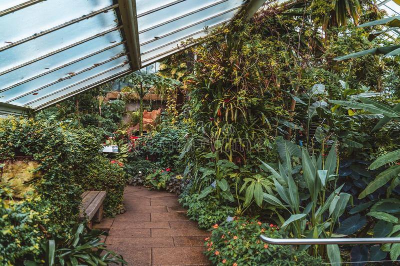 Cactus and plants from ten different climate zones in Princess of Wales Conservatory at Kew Gardens, UNESCO, London stock photography