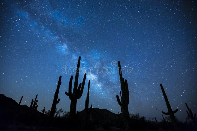 Cactus Plants Under the Starry Sky stock photo