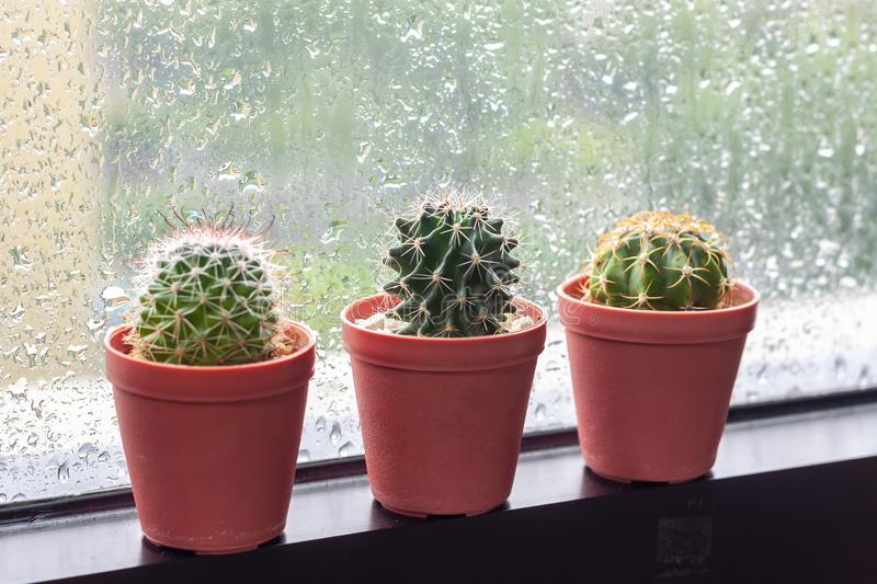 Cactus in pot displayed on window with water drops of rain royalty free stock images