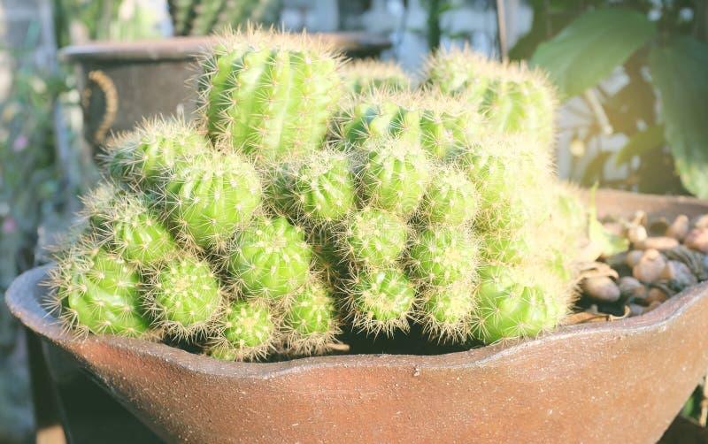 Cactus in pot gemaakte solf toon voor achtergrond royalty-vrije stock fotografie